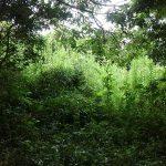 茨城県鉾田市上幡木