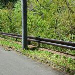 丸紅富士桜別荘地