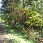 大沼湖畔緑の森